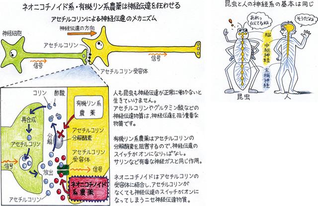 中毒 有機 症状 リン 有機リン中毒およびカーバメート化合物による中毒