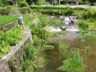 ネオニコチノイド系農薬の生物への摂取経路と水環境リスクに関する研究及び啓発